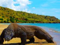 objek wisata Taman Nasional Komodo berada di